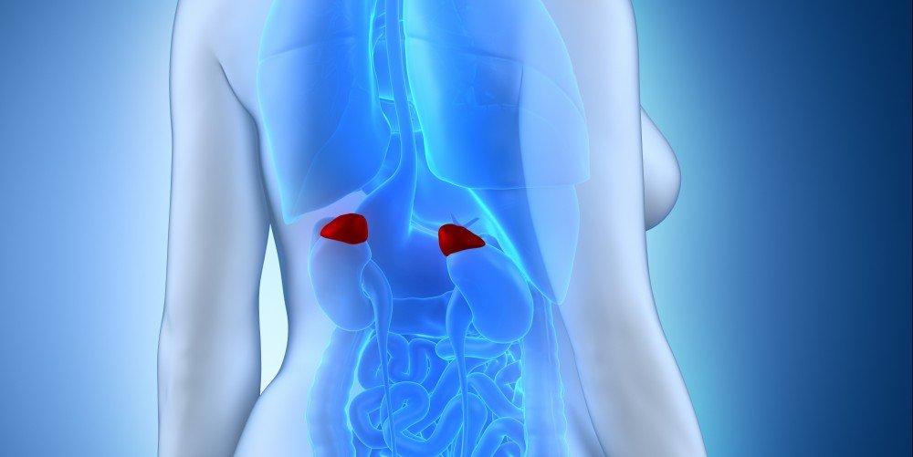 Adrenal Hastalıkları